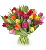 Bouquet Tulipanii